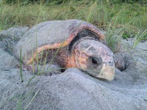 cc-dawn-turtle-img_0669