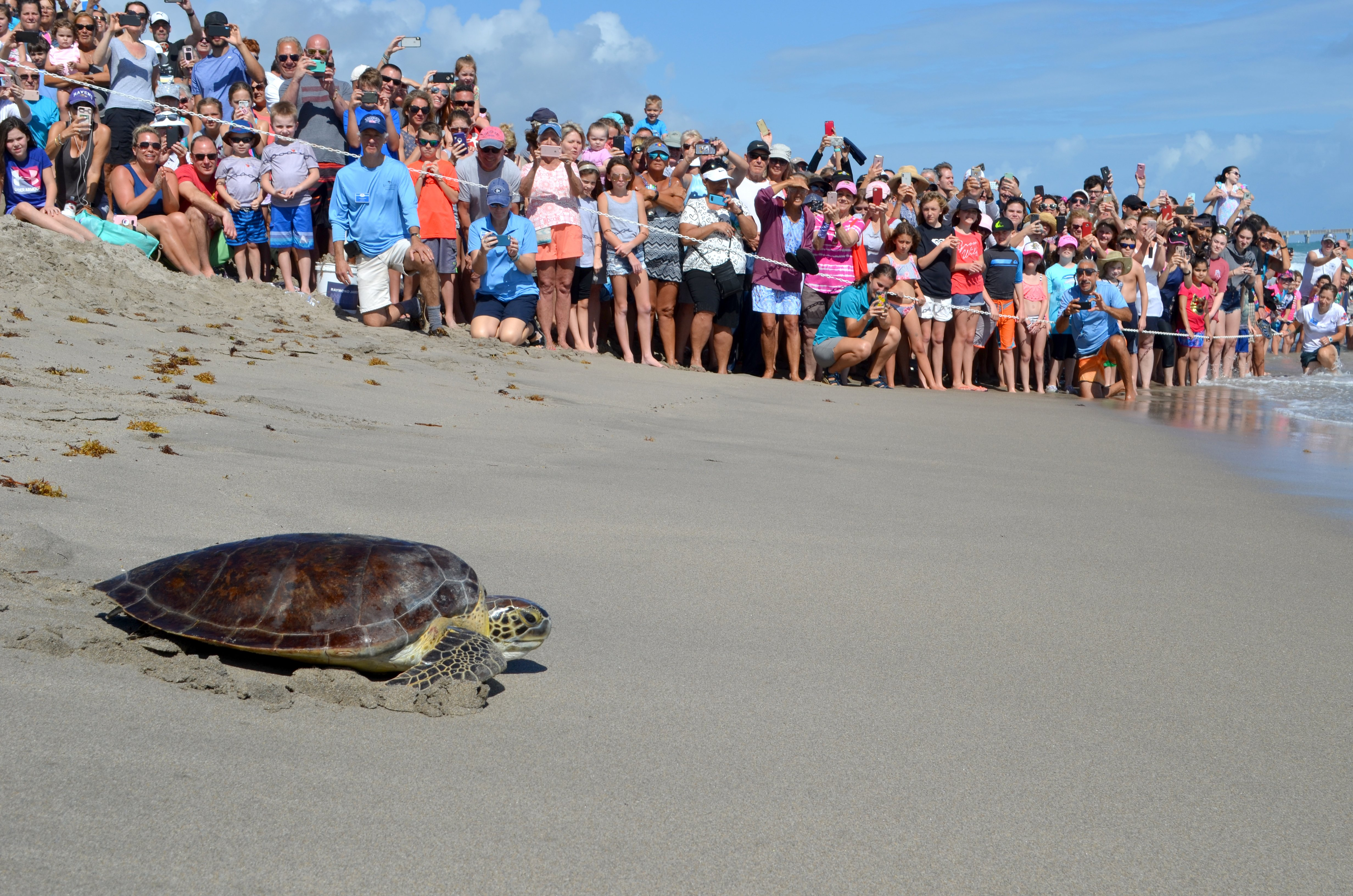 Sea turtle release photo