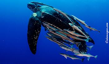 Egan_leatherbackweb