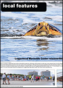 Loggerhead-Marinelife-Center-releases-Sea-Turtle-Gillbert