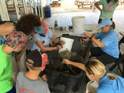 Marine Debris Clean-up