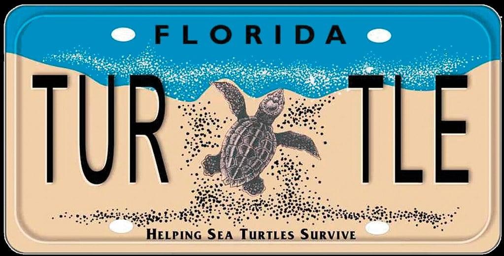 Sea-Turtle-License-Plate-1