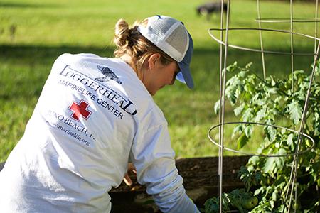 lmc-shirt-in-garden