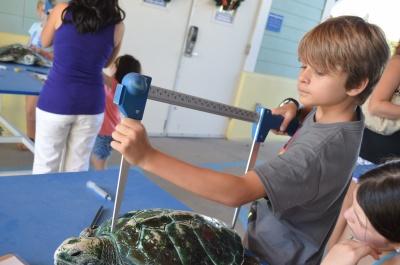 sea-turtle-savers
