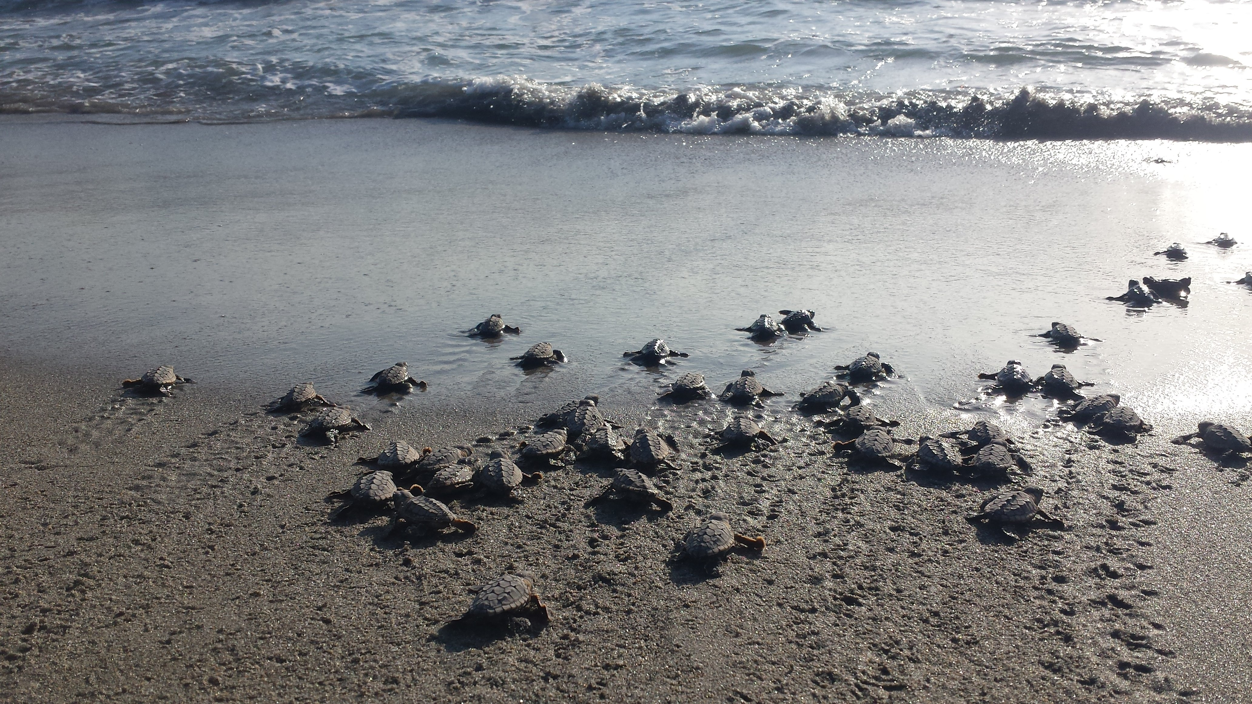 Loggerhead Marinelife Center Breaks All-Time Sea Turtle Nest Count Record -  Loggerhead Marinelife Center