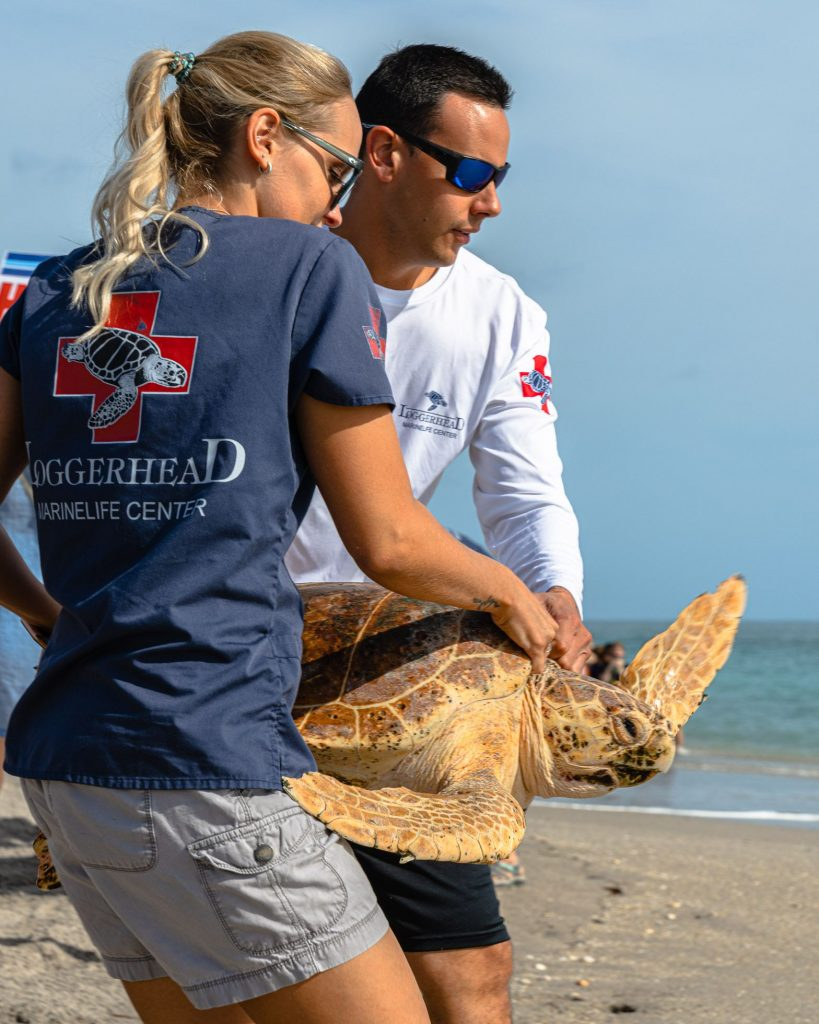 Loggerhead Marinelife Center's rehabilitation staff and volunteers work tirelessly to rehabilitate sick or injured sea turtles. Photo Courtesy of Matt Hayes Photography.