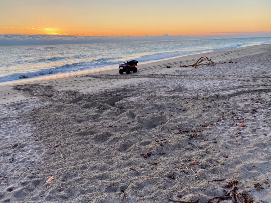 Friday, February 28th marked the start of the 2020 sea turtle nesting season on LMC's 9.5-mile stretch of beach.