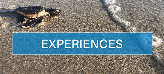 28f05-placeholder_experiences