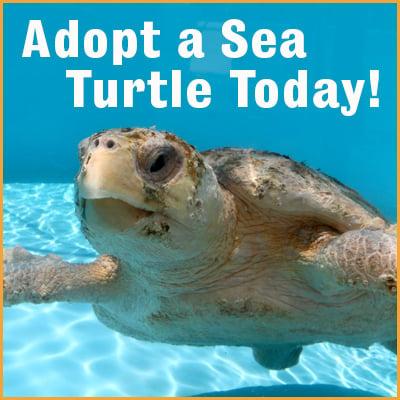 a7f02-adopt_sea_turtle