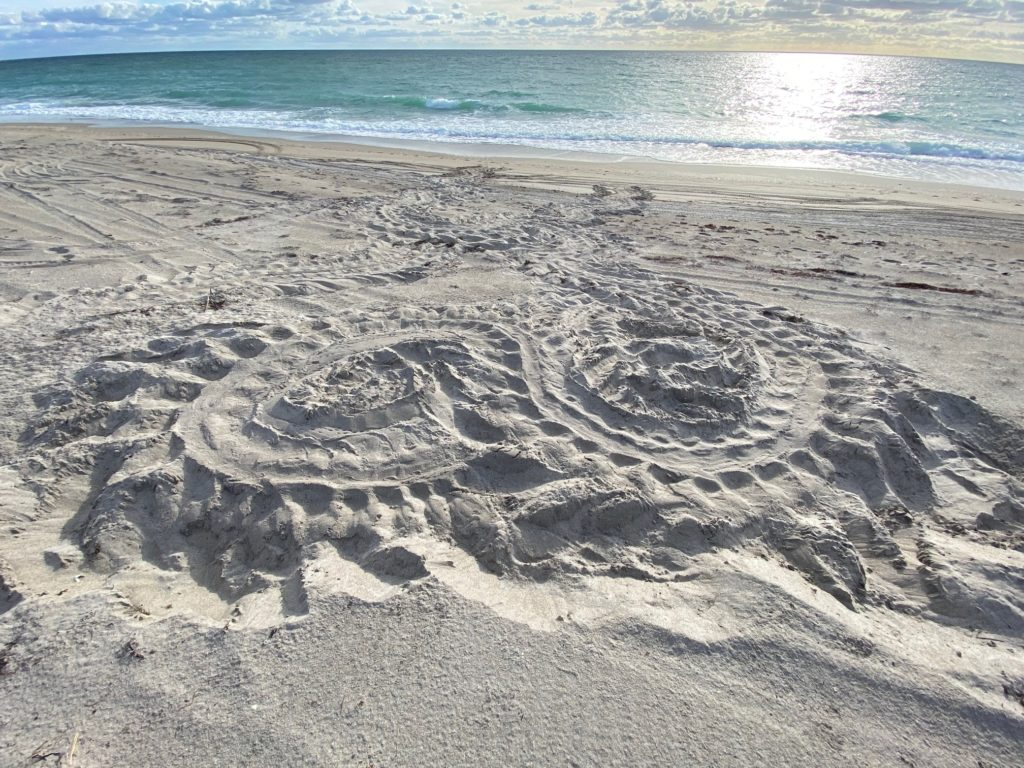 Jen Reilly captures the unique patterns of leatherback tracks and parallel circles of orientation loops.