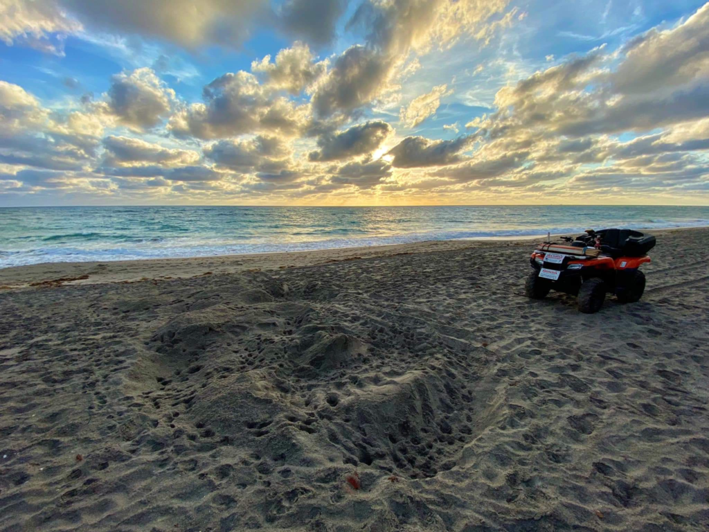 Jen Reilly often stops to appreciate nature and document leatherback tracks during her morning survey.