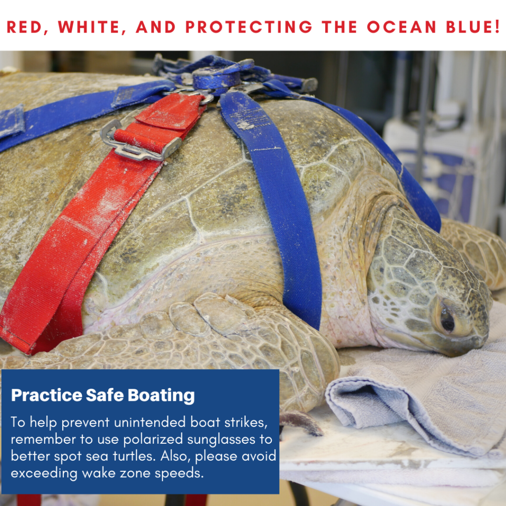 Loggerhead Marinelife Center has designed a safe boating reminder for the public to share during Memorial Day Weekend.