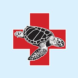 circle_sea_turtle