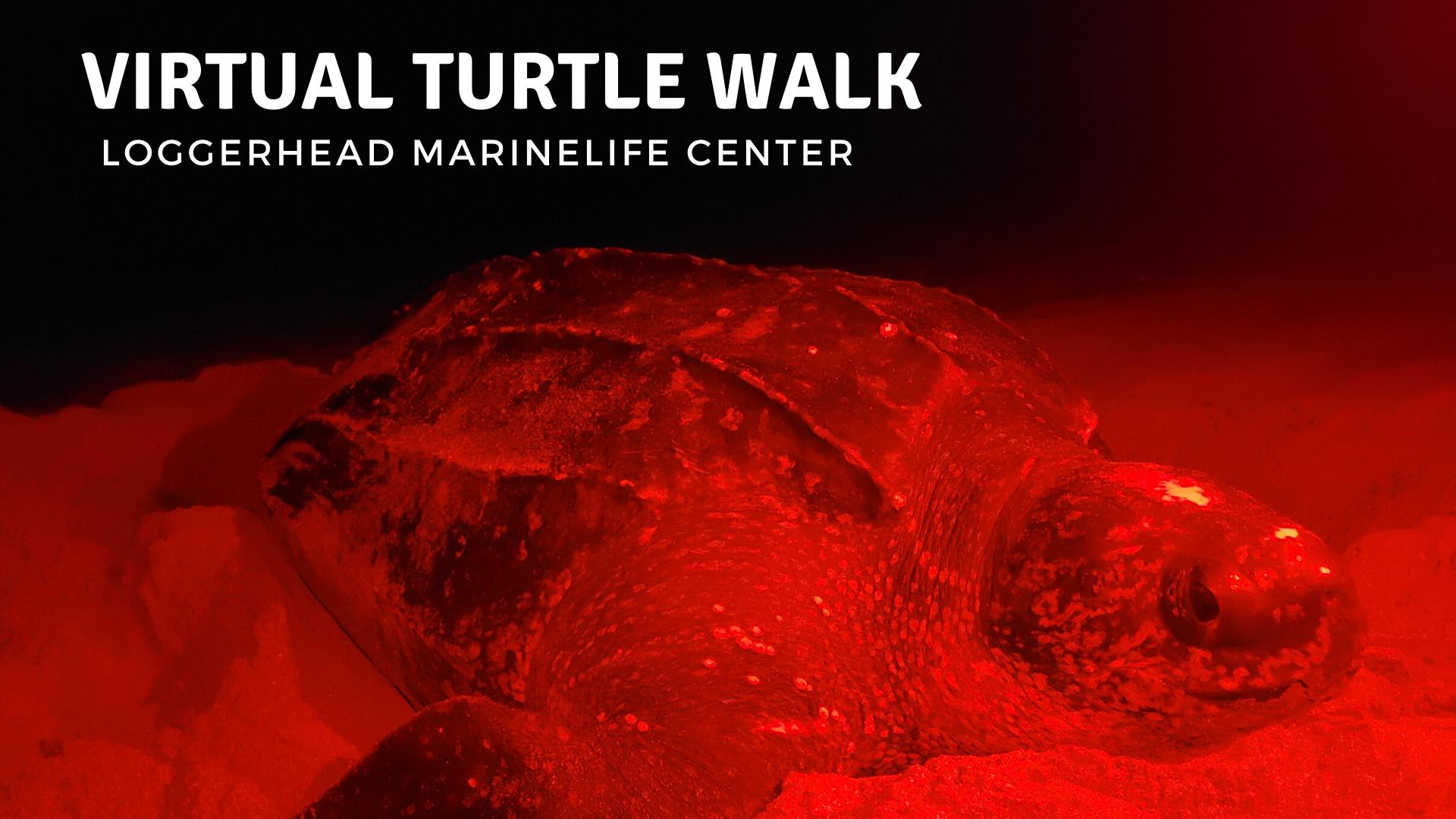 Virtual-Turtle-Walk