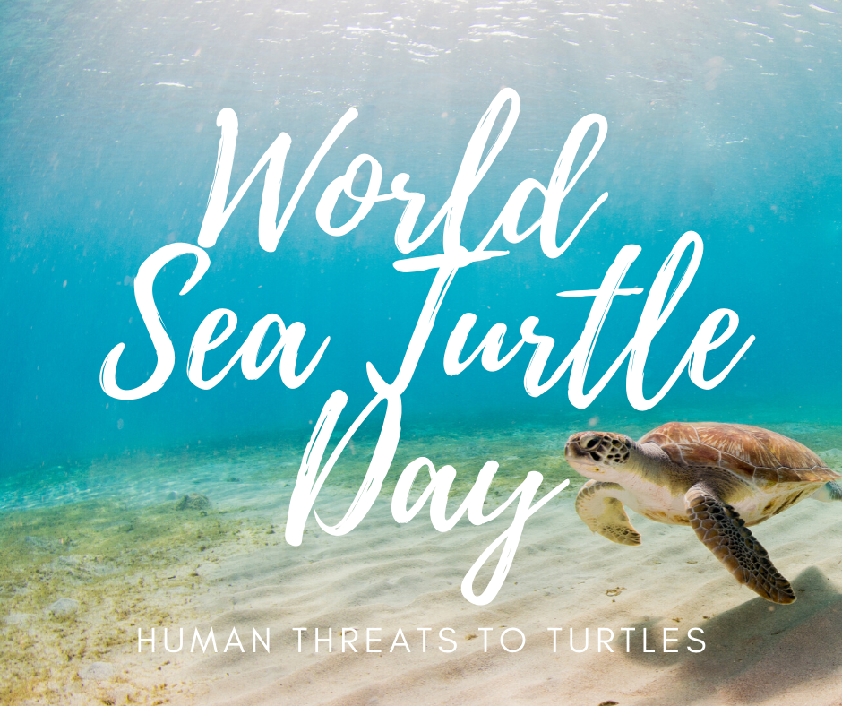 In honor of World Sea Turtle Day on June 16, Loggerhead Marinelife Center (LMC) highlights the main threats sea turtles currently face and tips to combat them.