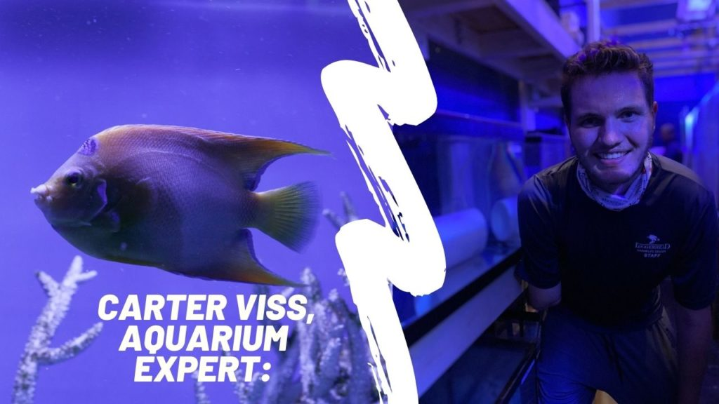 Maintenance Technician and marine biologist, Carter Viss assists the Center in obtaining, quarantining, and acclimating fish at Loggerhead Marinelife Center.