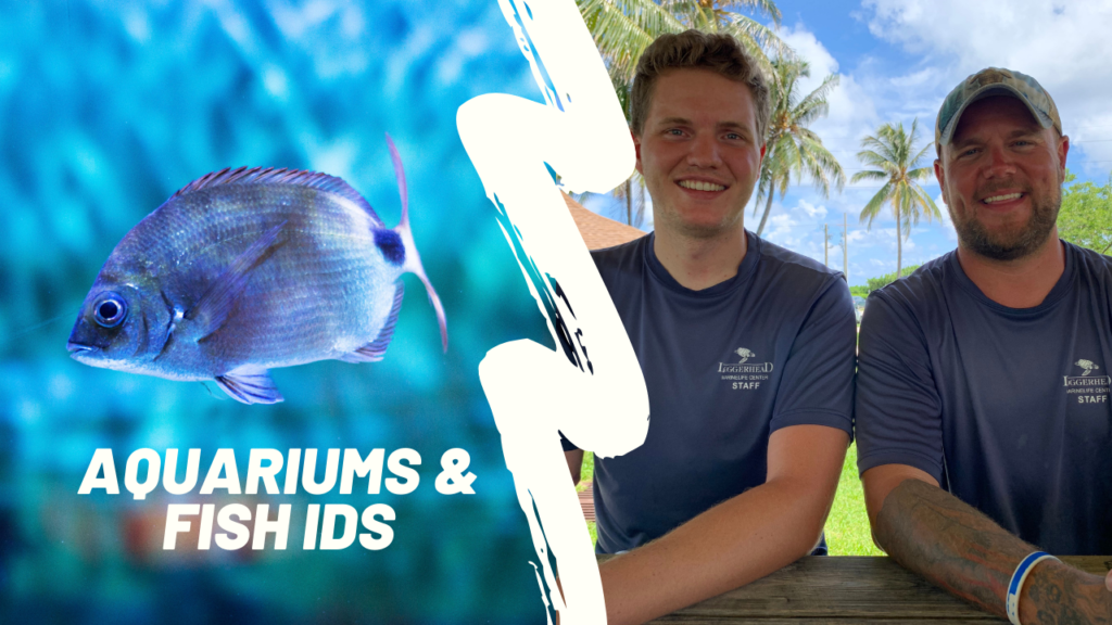 Loggerhead Marinelife Center's fish experts, Andy and Carter launched a YouTube playlist to educate the public on aquariums and proper fish identification. Both spend their free time fishing and enjoying the outdoors.