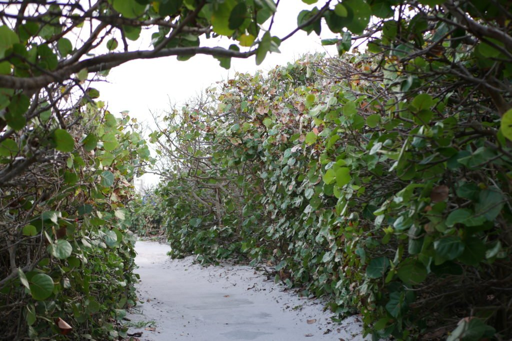 Loggerhead Marinelife Center invites guests to enjoy a hike through nature instead of Black Friday shopping.