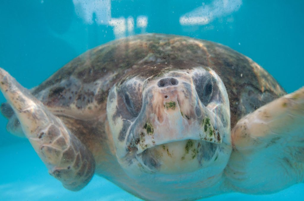 Loggerhead Marinelife Center encourages guests to opt outside to connect with and protect our natural environment.