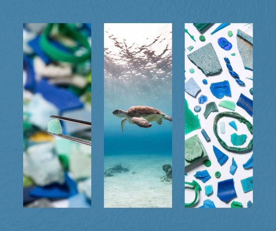 Loggerhead Marinelife Center encouraged students to continue to examine microplastics and contribute their data to the Florida Microplastic Awareness Project.