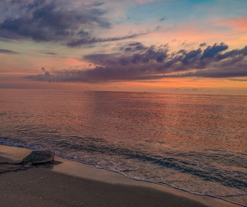 Loggerhead Marinelife Center monitors and protects 9.5 miles of critical sea turtle nesting beach, which welcomes leatherback, green, and loggerhead sea turtles.