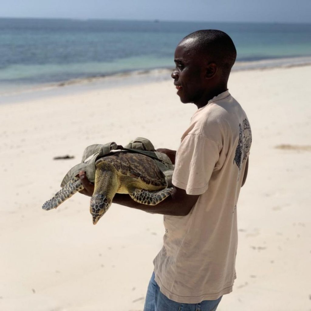 As part of the Sea Turtle Rescue Alliance, Loggerhead Marinelife Center worked with Lewa (pictured above) through telemedicine to treat Pole, a hawksbill sea turtle, in Kenya.