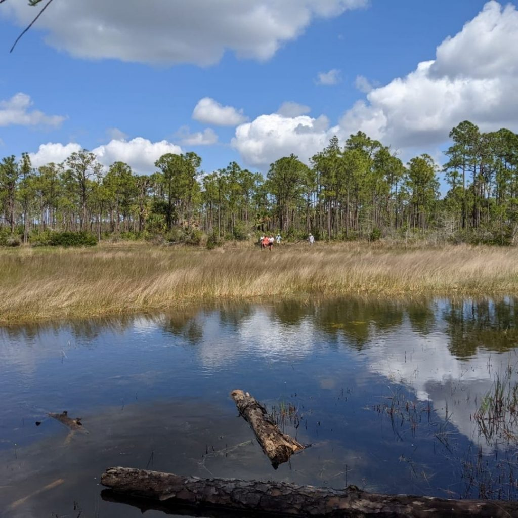 Hike2O participants explored South Florida's natural ecosystems ranging from hammock to cypress slough to wetland.