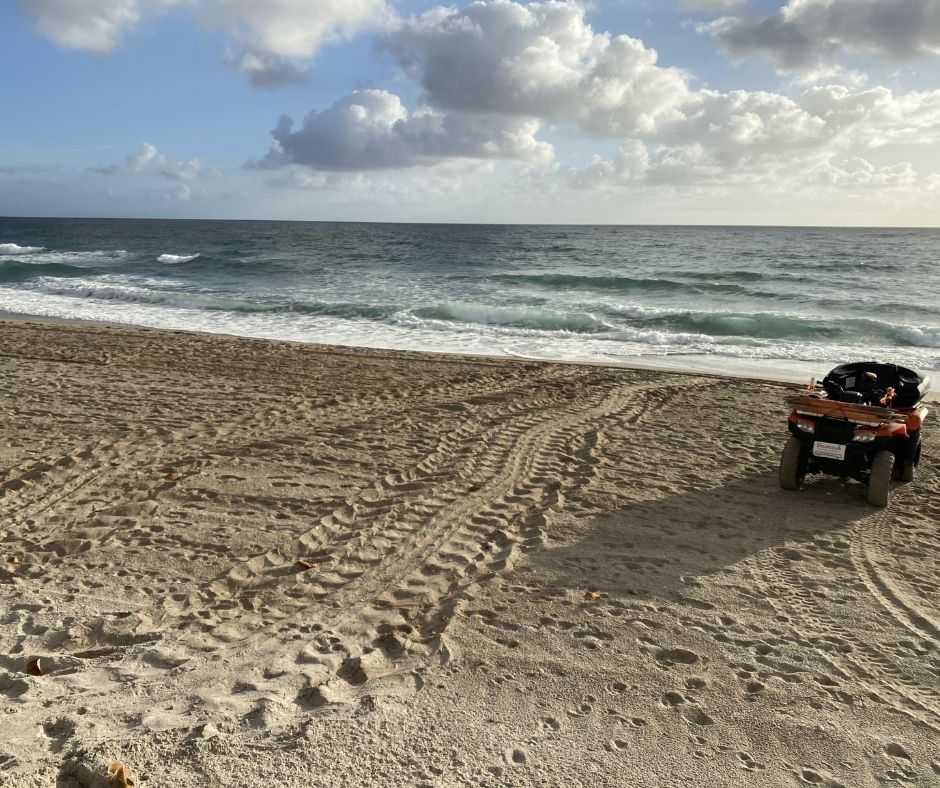Loggerhead Marinelife Center documented its first two leatherback sea turtle nests of Sea Turtle Nesting Season 2021 on February 27 and March 1.
