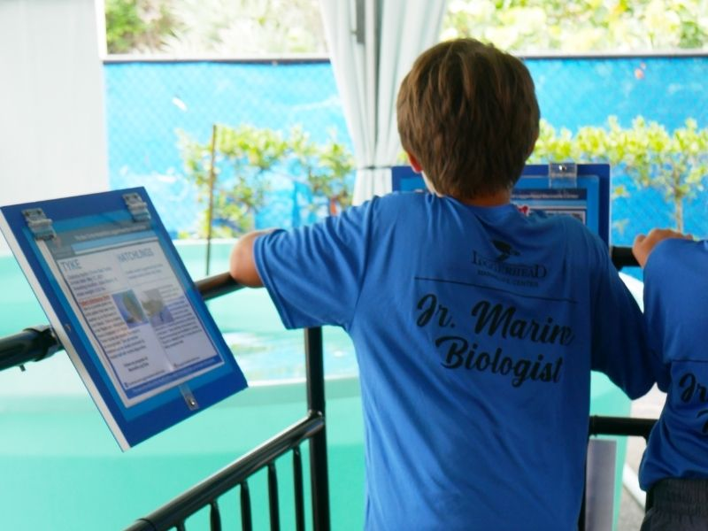 Jr. Marine Biologist Campers toured Loggerhead Marinelife Center's Outdoor Hospital and learned about the patients.