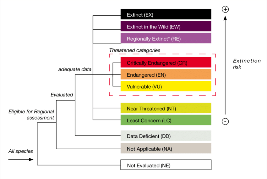 The IUCN is an international organization dedicated to the conservation of nature. Based on population data, the species studied are placed into one of these categories.